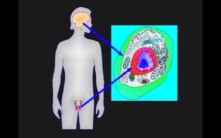 38-brain-testes